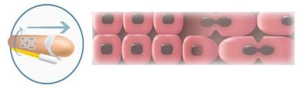 Рост клеток с AO